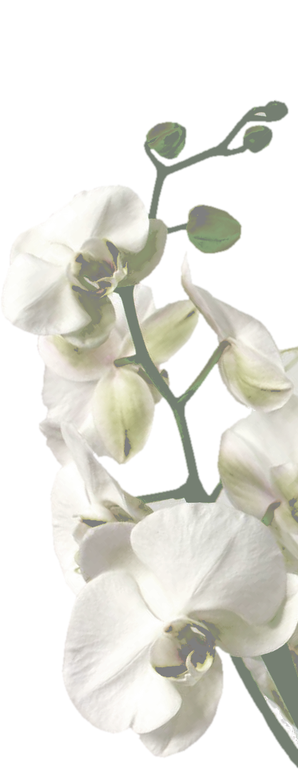 Orchidee-back5.png